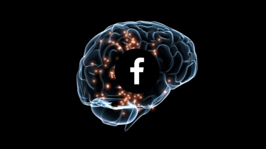 FB neuroscience
